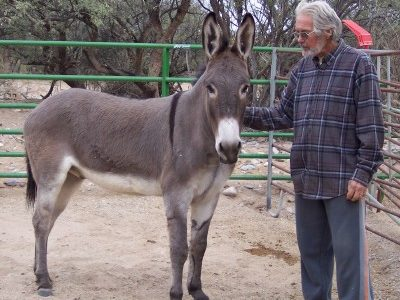 About Forever Home Donkey Rescue - A Small Private Sanctuary